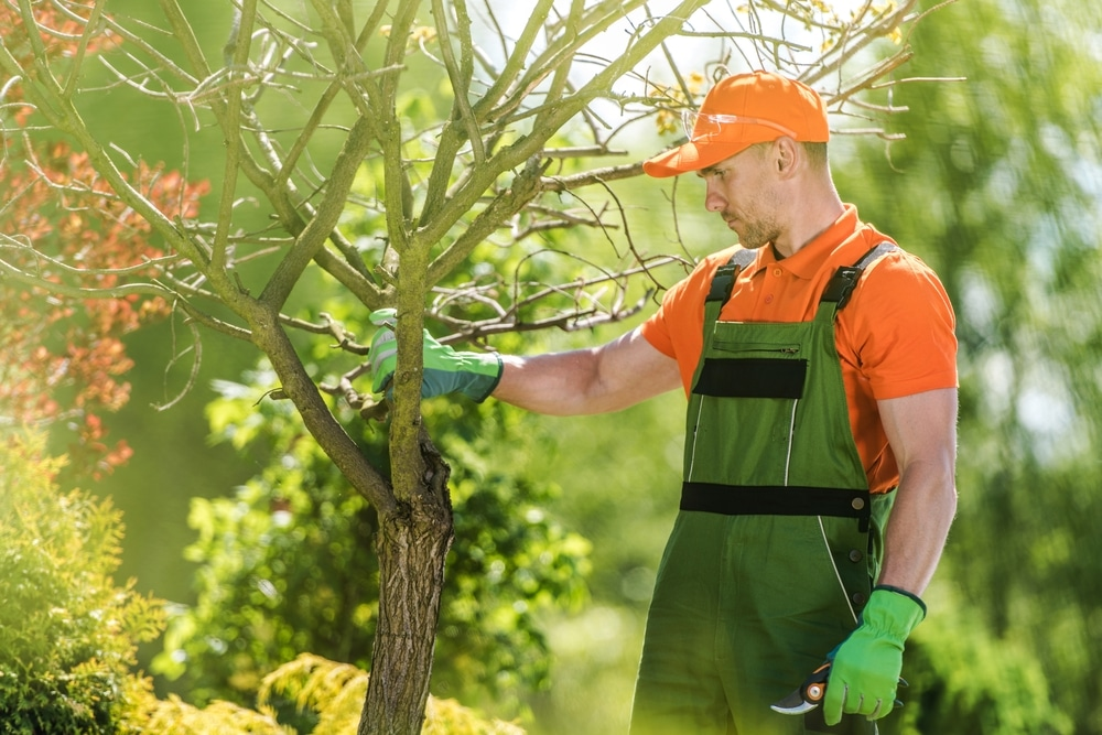 tree trimmer cutting branches with clippers