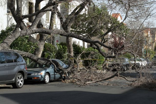 emergency tree service needed after storm damage