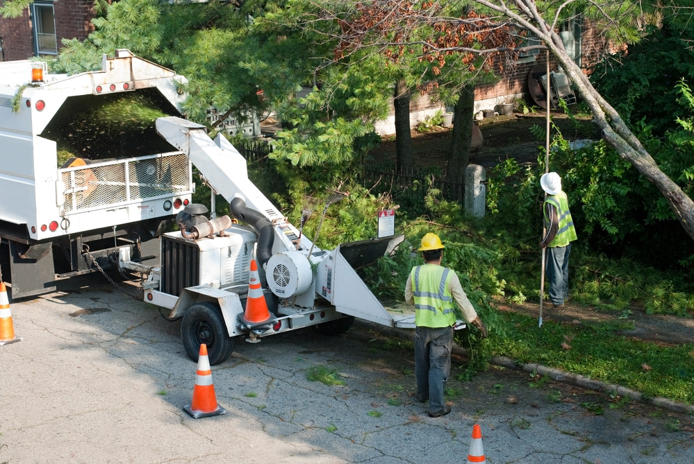 tree care experts clearing brush and cutting tree limbs