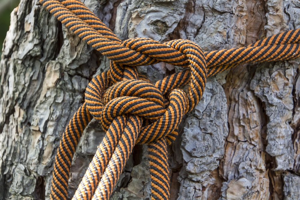 tree cabling and bracing Greenville