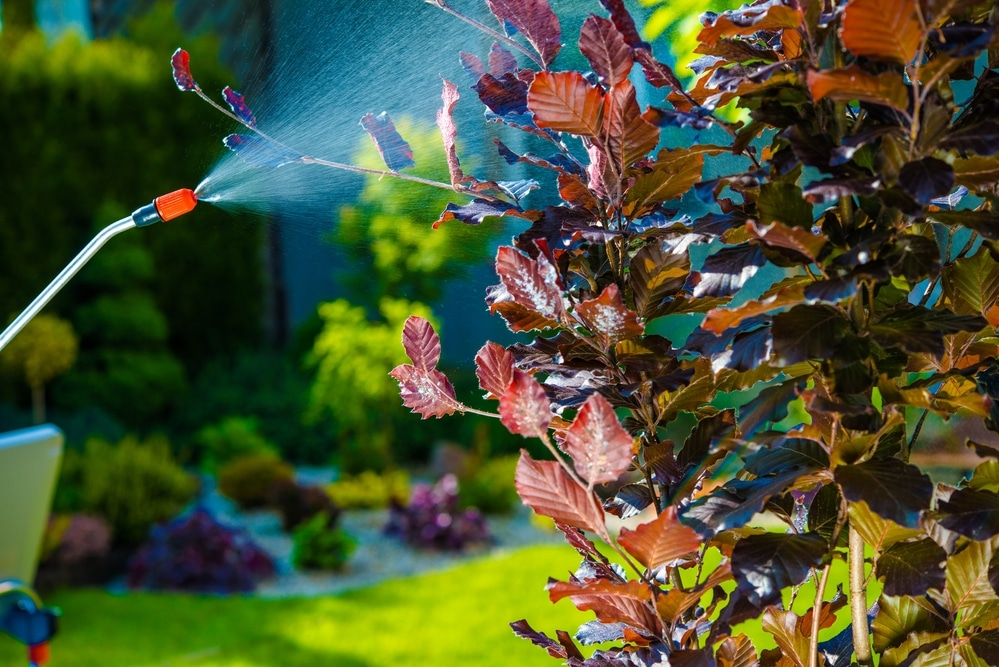 Tree service spraying for pests