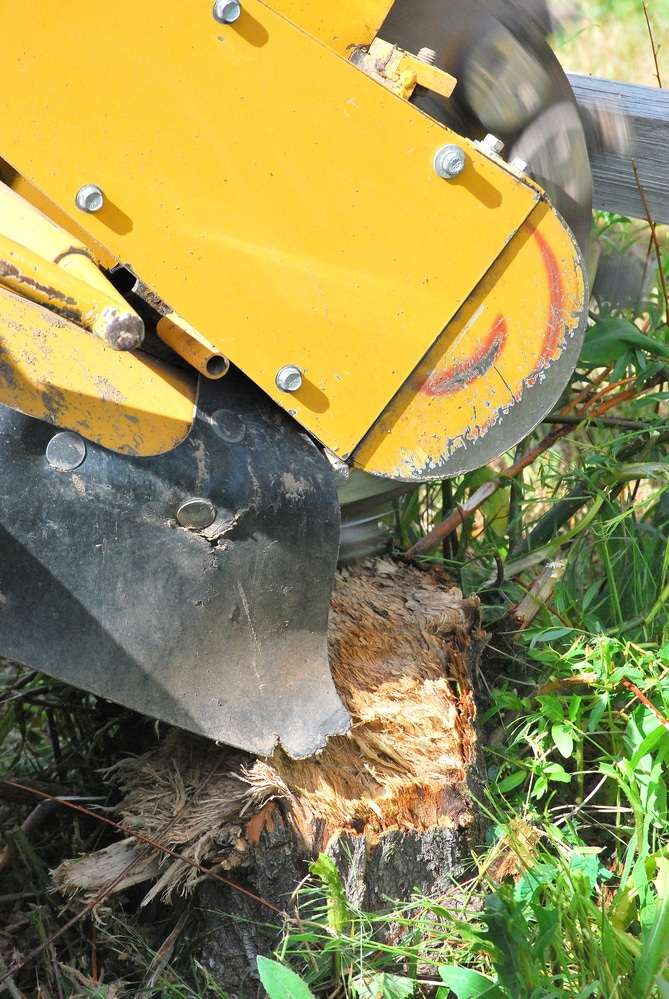 tree service professional grinding stump