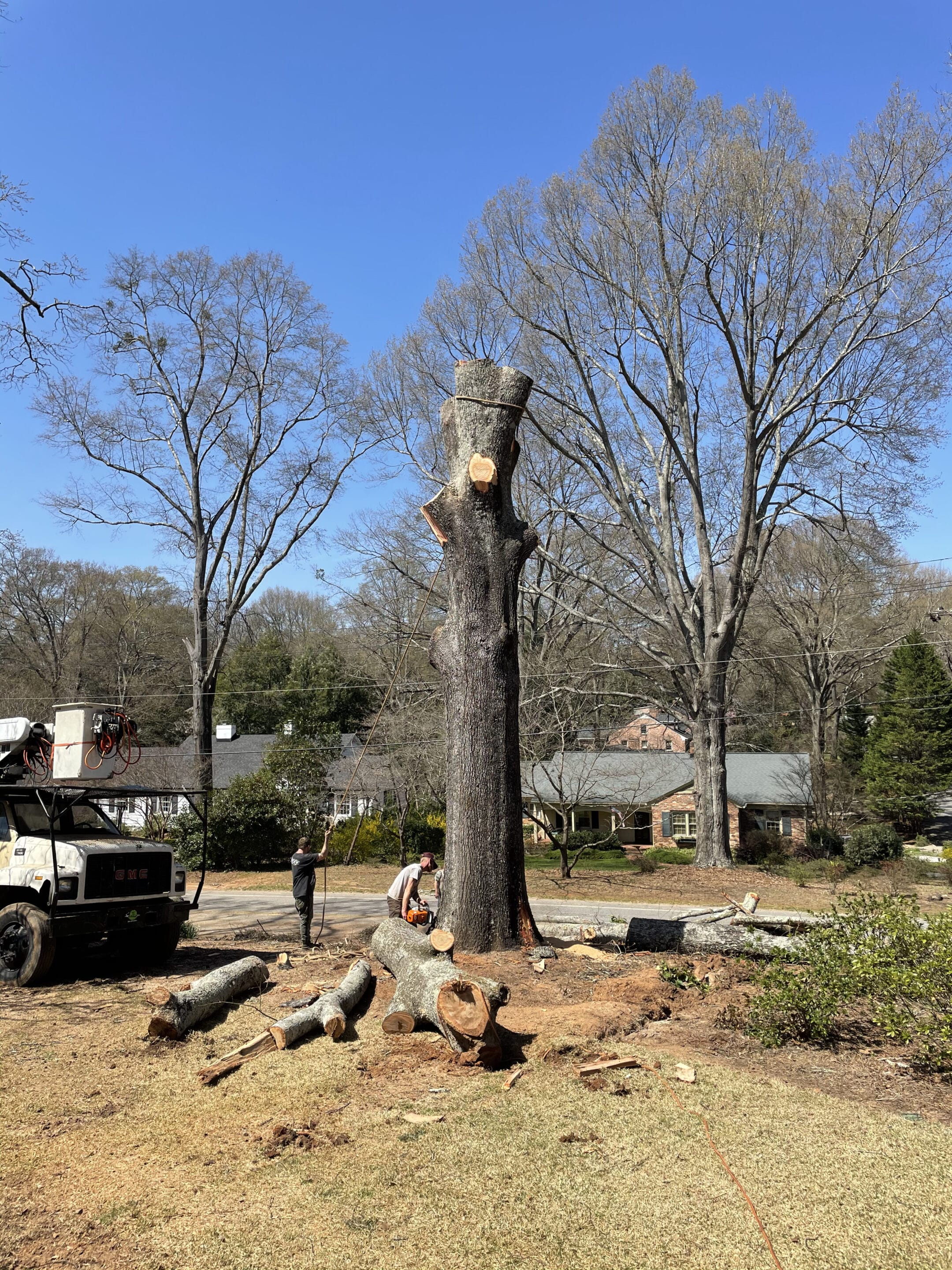 Tree Removal of McBee in Greenville