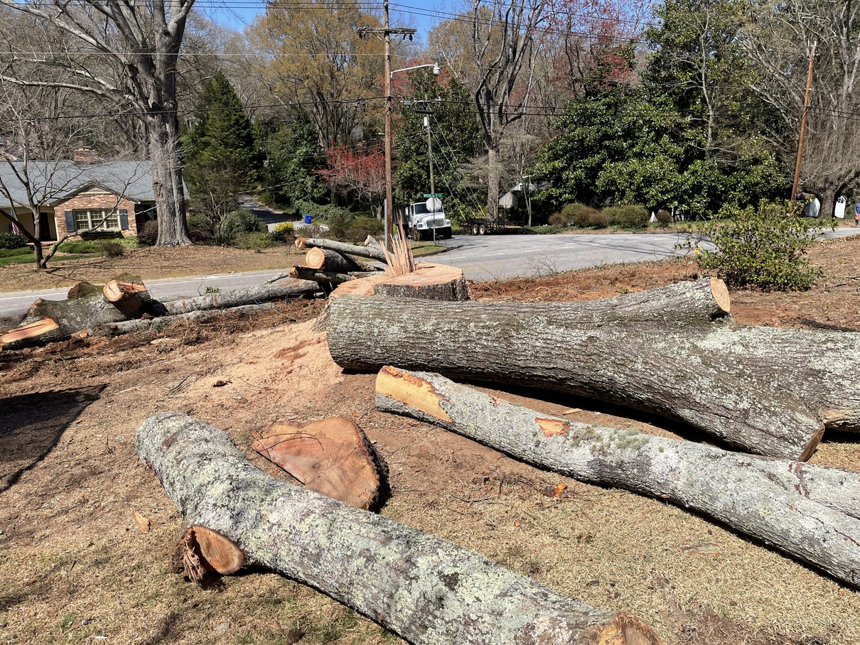 Showing tree that was cut down on residential property